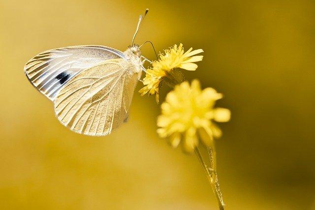 これは、蝶